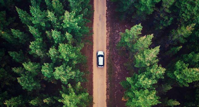 Una strada nel bosco dall'alto