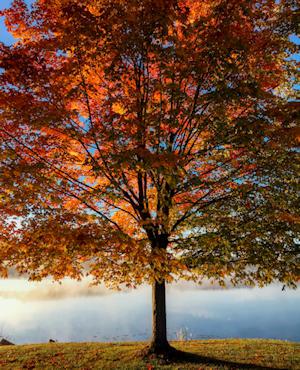 Un acero rosseggiante sul lago