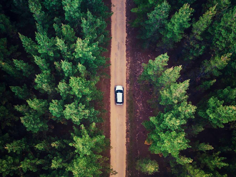 Una strada nei boschi dall'alto